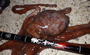 Kraken 76